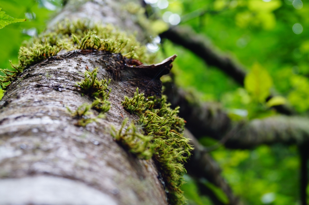 tree_branch_moss_by_scottyvengeance-d57zwsp